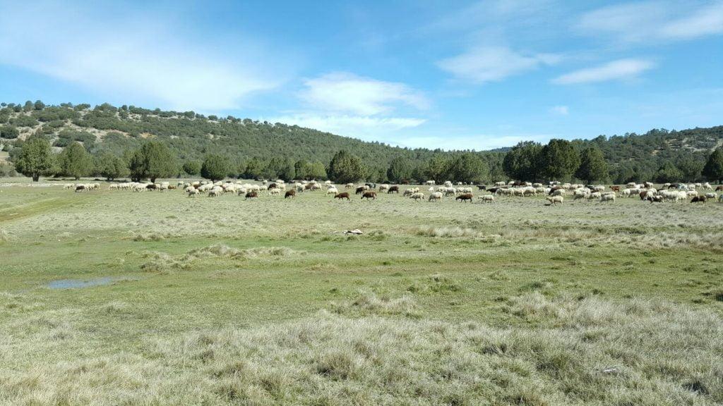 Serranía de Cuenca