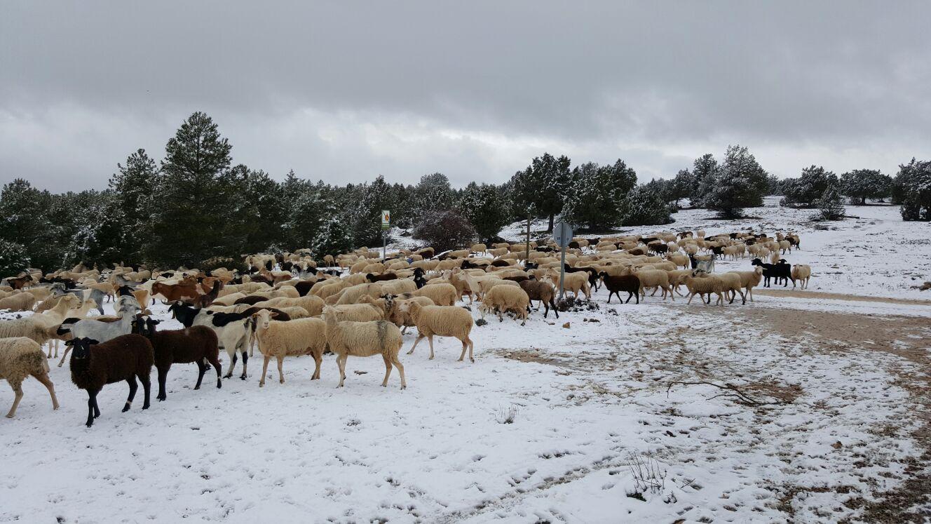 Asociación de Productores de Cordero de la Serranía de Cuenca